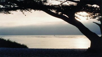 Cypress silhouette against the sea, Carmel, Claifornia, US, by Steve Spanoudis
